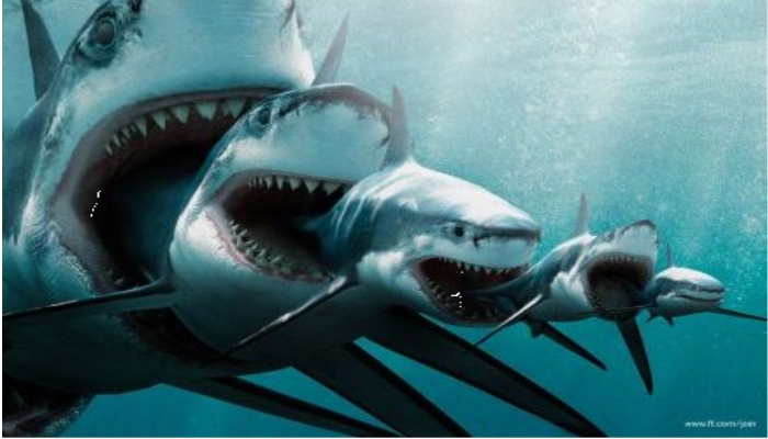 A detailed look at Shark History from   Great white shark